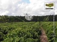 Aplicação aérea em cultura de café_1