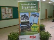 Lançamento 10a. Edição da Campanha de Reflorestamento do Pinheiro Brasileiro_10