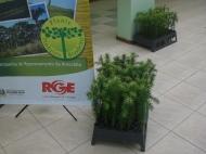 Lançamento 10a. Edição da Campanha de Reflorestamento do Pinheiro Brasileiro_9